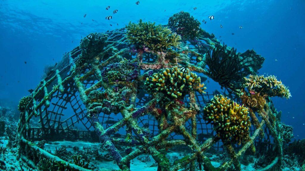 Biorock Korallenriff